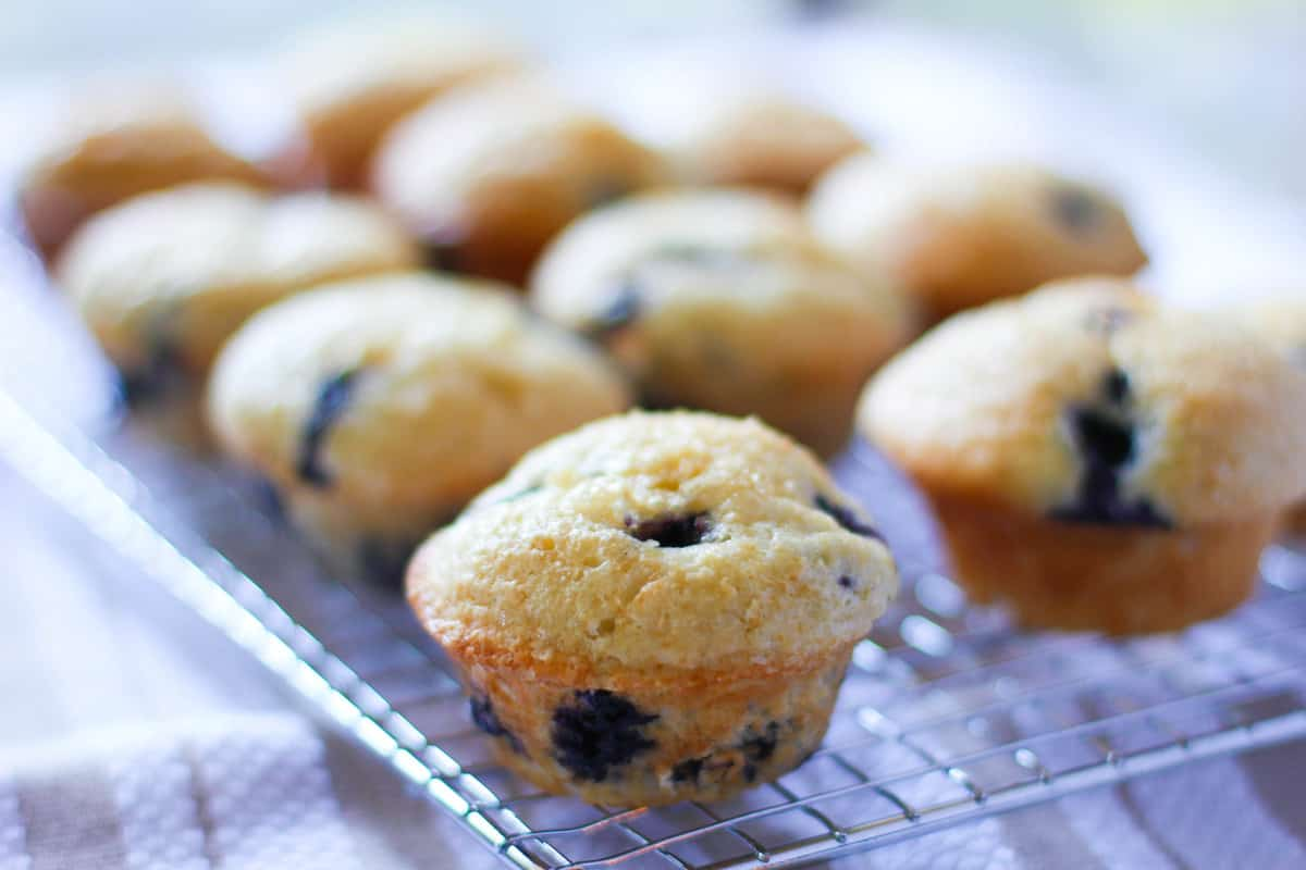 delicious blueberry muffins cooling on a rack
