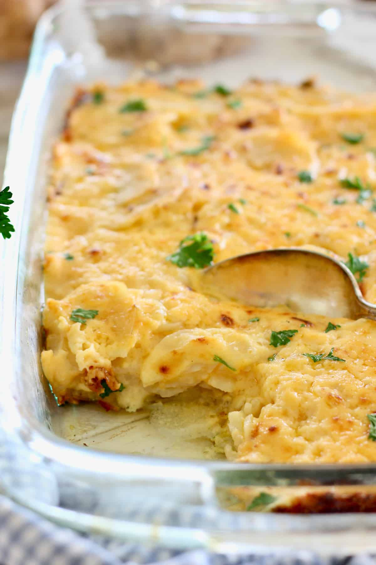 Cheesy Scalloped Potatoes in a 9 x 13 baking dish